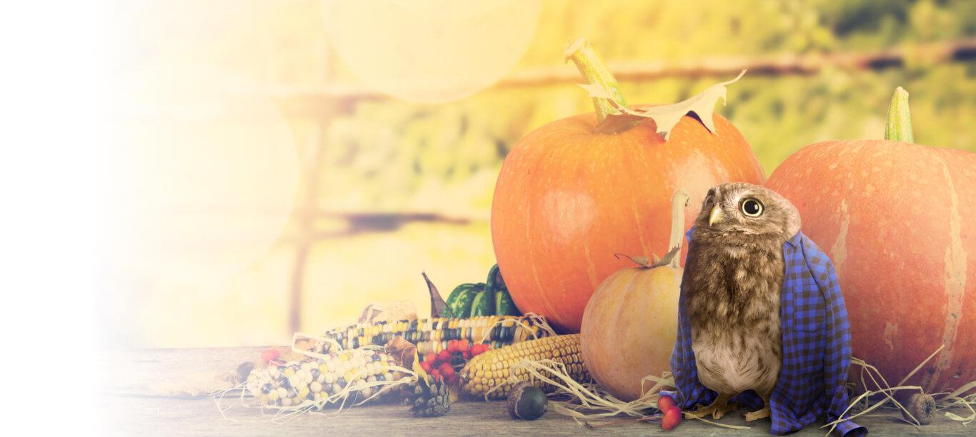 slide – Autumn, pumpkins and owl